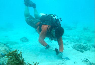Scientific divers