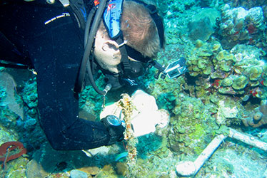 Diver examining reef