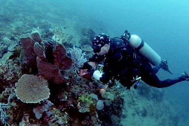 Diver examining coral